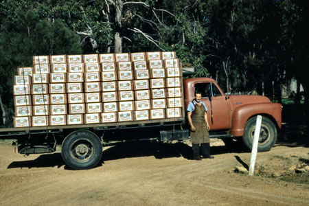 One of the last truckloads of apples to be exported from Australia in wooden boxes, 1955.